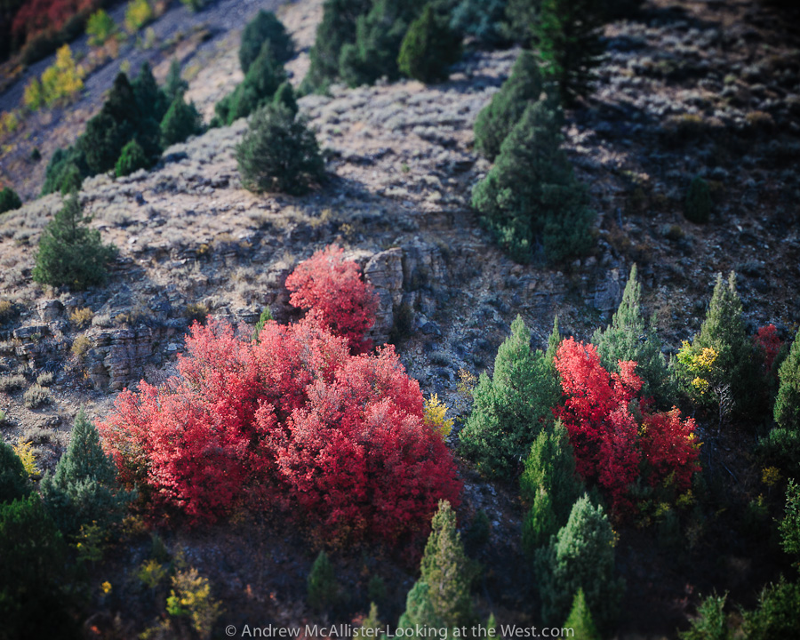 Fall color, Logan Canyon in Northern Utah