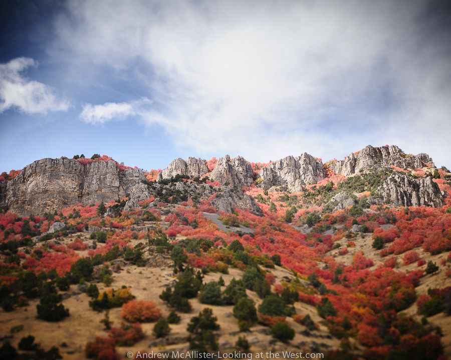 Fall color, Blacksmith Fork Canyon in Northern Utah