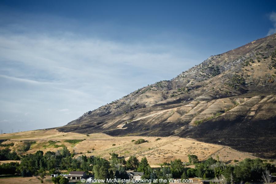 Wildfire dammage