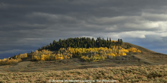 Fall color near Bondurant, Wyoming.