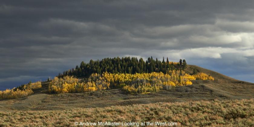 Fall color near Bondurant, Wyoming.